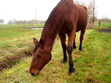 alle paarden 012
