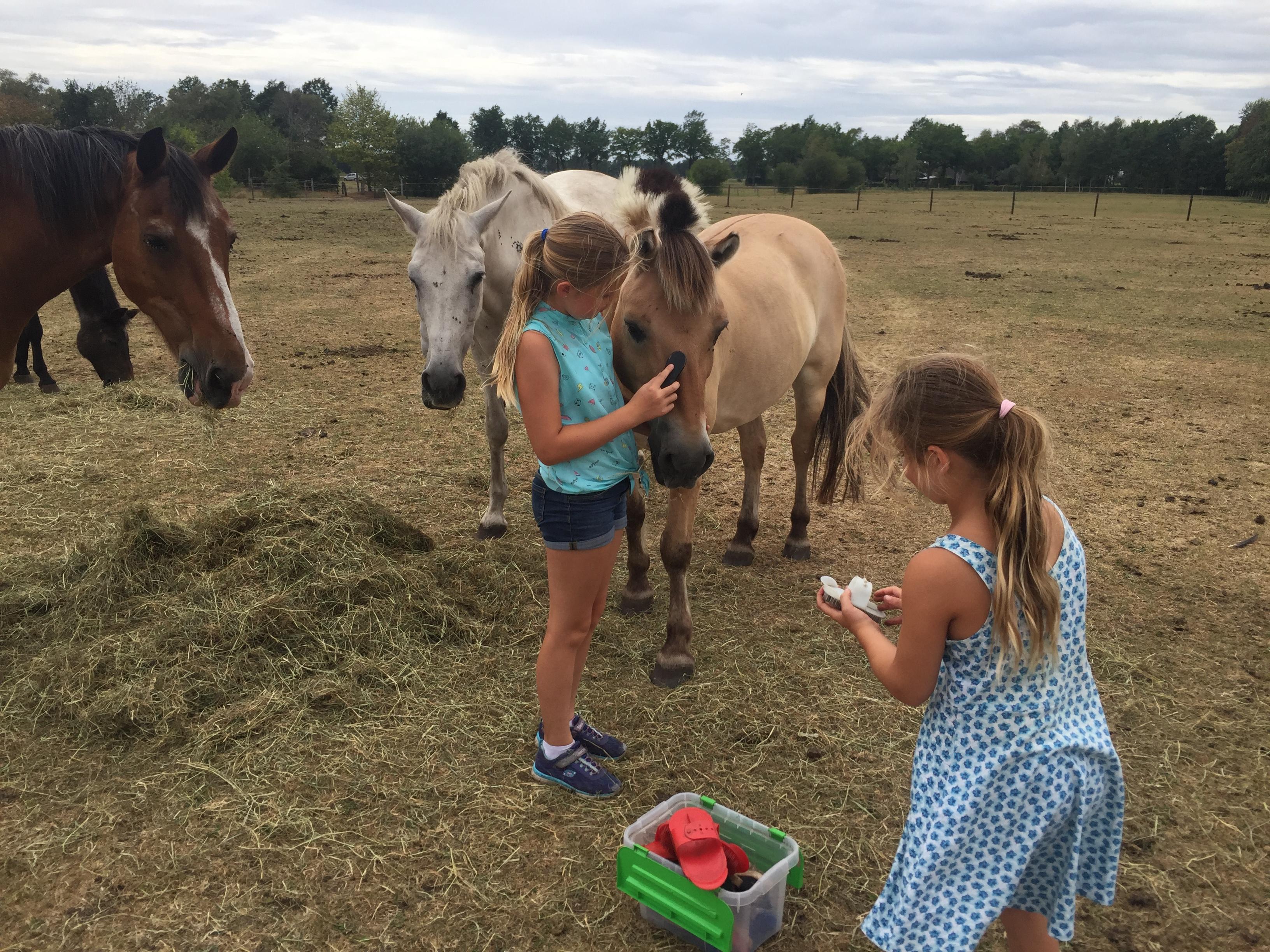 paarden-knuffelen-29-juli-2018-12