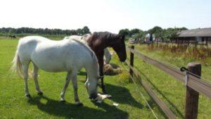 paarden picknick 2015