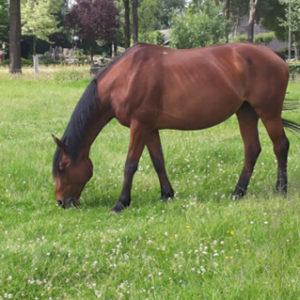 Melody in het paardenrusthuis 't Olde Manegepeerd
