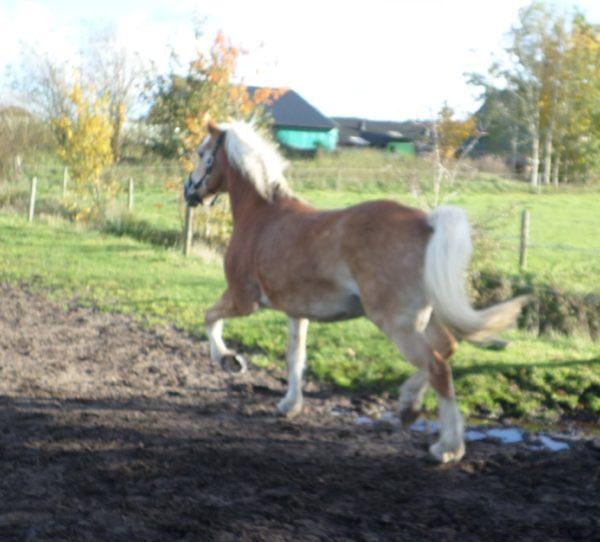 Olava stal de waal krimpen ad ijssel nu met paardenpension