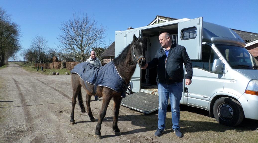 Melvin van Hippisch Centrum Dordrecht komt uit de trailer bij Manegepeerd
